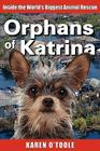 Orphans of Katrina Cover Image