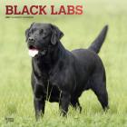 Labrador Retrievers, Black 2021 Square Foil Cover Image