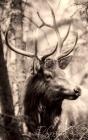 Notebook: deer elk animal wildlife stag male antlers animal rights Cover Image
