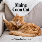 2021 Maine Coon Cat Wall Calendar Cover Image