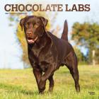 Labrador Retrievers, Chocolate 2021 Square Foil Cover Image