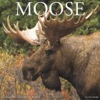 Moose 2020 Wall Calendar Cover Image