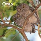 Owls 2020 Mini 7x7 Cover Image