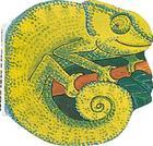 Chameleon (Pocket Pals (Safari Ltd)) Cover Image