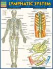 Lymphatic System Cover Image