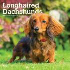 Dachshunds, Longhaired 2020 Square Cover Image