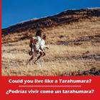 Could You Live Like a Tarahumara? ¿podrías Vivir Como Un Tarahumara? Bilingual Spanish and English (Kids' Books from Here and There) Cover Image