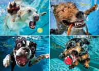 Underwater Dogs: Pool Pawty 1000-Piece Puzzle Cover Image