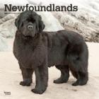 Newfoundlands 2021 Square Cover Image