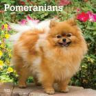 Pomeranians 2020 Square Cover Image