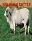 Brahman Cattle: Super Fun Facts And Amazing Pictures Cover Image