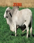 Zebu: Children's Books --- Amazing Facts & Pictures Cover Image