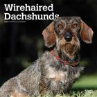 Dachshunds, Wirehaired 2020 Square Cover Image