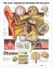 The Ear: Organs of Hearing and Balance Anatomical Chart Cover Image