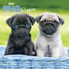Pug Puppies 2021 Square Cover Image