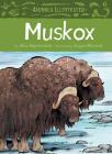 Animals Illustrated: Muskox (English) Cover Image