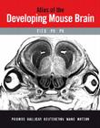 Atlas of the Developing Mouse Brain at E17.5, P0 and P6 [With CDROM] Cover Image