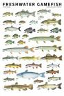 Freshwater Gamefish of North America Poster Cover Image