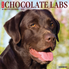 Just Chocolate Labs 2021 Wall Calendar (Dog Breed Calendar) Cover Image