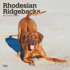 Rhodesian Ridgebacks 2021 Square Cover Image