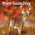 White Tailed Deer 2020 Mini 7x7 Cover Image