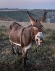 Notebook: Funny Donkey France Animal Tourism Normanby Ass Cover Image