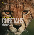 Face to Face with Cheetahs (Face to Face with Animals (Library)) Cover Image