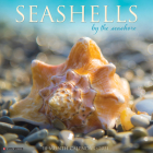 Seashells 2021 Wall Calendar Cover Image