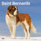 Saint Bernards 2021 Square Cover Image