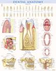 Dental Anatomy Cover Image