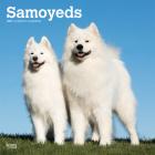 Samoyeds 2021 Square Cover Image