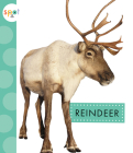 Reindeer (Spot Arctic Animals) Cover Image