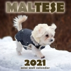 Maltese 2021 Mini Wall Calendar Cover Image