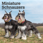 Schnauzers, Miniature 2021 Square Cover Image
