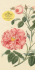 John Derian Paper Goods: Everything Roses Notepad Cover Image