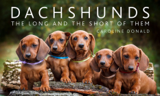 Dachshunds: The Long and the Short of Them Cover Image