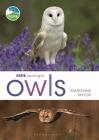RSPB Spotlight Owls Cover Image