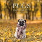 Pugs Calendar 2021: 16 Month Calendar Cover Image
