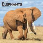 Elephants 2020 Square Cover Image