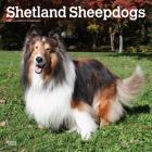 Shetland Sheepdogs 2021 Square Cover Image