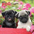 Pug Puppies 2020 Square Cover Image