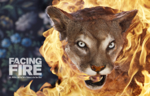 Facing Fire: Art, Wildfire, and the End of Nature in the New West Cover Image