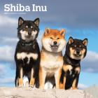 Shiba Inu 2021 Square Cover Image