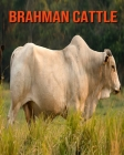 Brahman Cattle: Amazing Facts about Brahman Cattle Cover Image