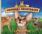 Outgoing Oriental Shorthairs (Cat Craze) Cover Image