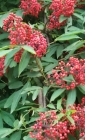 Wild Berries Journal (Natural Wonders #80) Cover Image