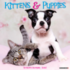 Kittens & Puppies 2021 Wall Calendar Cover Image