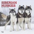 Siberian Huskies 2021 Square Foil Cover Image