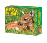 Baby Animals 2022 Box Calendar, Daily Desktop Cover Image