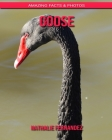Goose: Amazing Facts & Photos Cover Image
